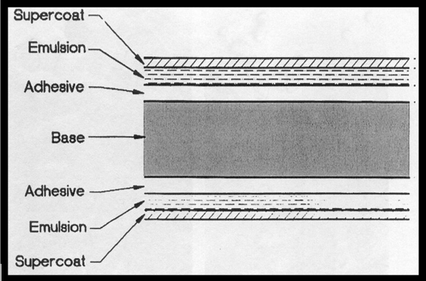 Cross-section of x-ray film